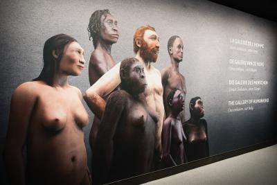 Evoltie mens ingang