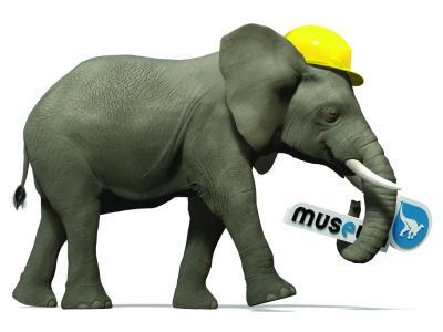 Een olifant met een veiligheidshelm