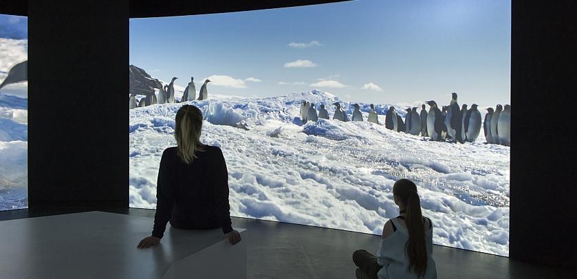Besucher, die eine 360°-Projektion in der Antarktis-Ausstellung verfolgen (Foto: Übersee-Museum Bremen, Foto Volker Beinhorn).