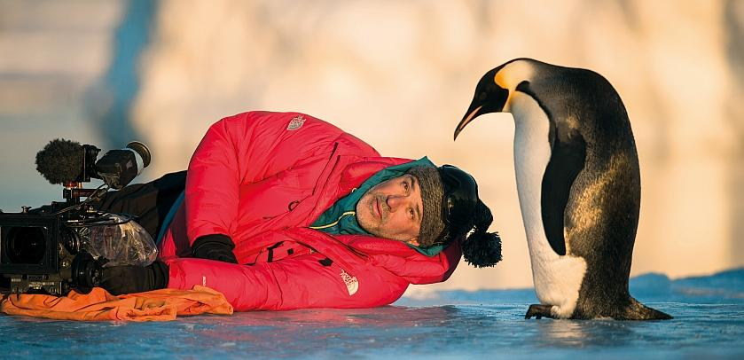 Luc Jacquet filming an emperor penguin a few centimetres from him (photo: Vincent Munier)