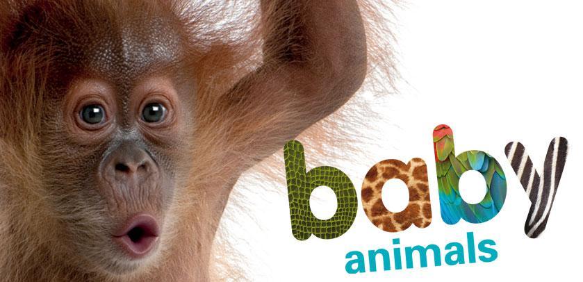 Visual of 'Baby Animals'