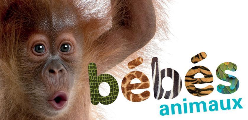 Visuel de Bébés animaux