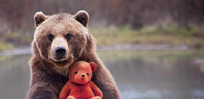 visual van de tentoonstelling Teddy & Beer: een bruine beer en een knuffelbeer
