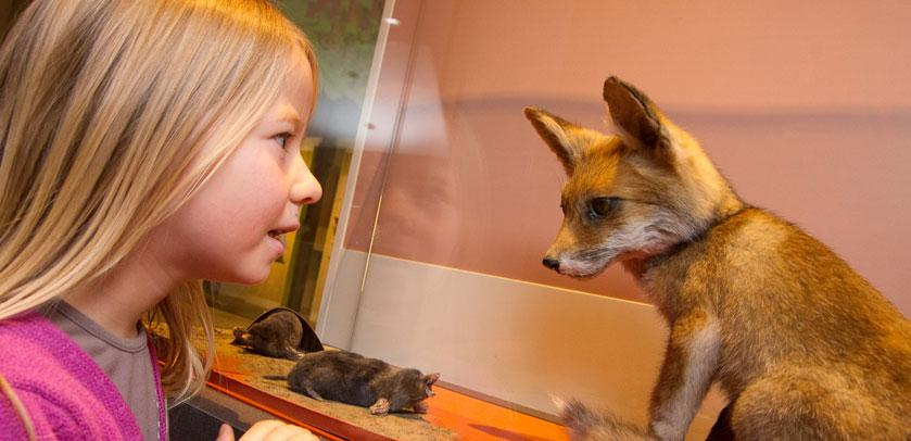 Young girl looking at a fox in BiodiverCITY - Jong meisje bekijkt een vos in BiodiverCITY - Jeune fille regarde un renard dans BiodiverCITY