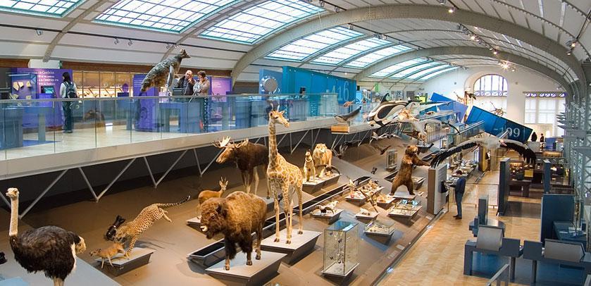 View of the Evolution Gallery - Zicht over de Evolutiegalerij - Vue sur la Galerie de l'Évolution