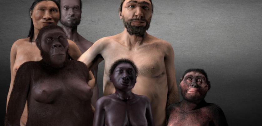 Im Früjhahr Ôffnen wir unsere neue Galerie des Menschen.