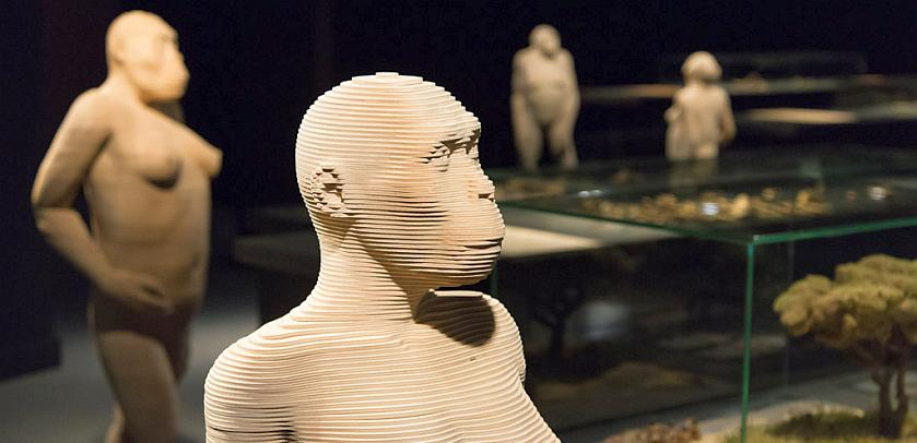 """Vitrines et reconstitutions 3D d'hominidés à taille réelle dans la zone """"Notre évolution"""" de la « Galerie de l'Homme - Notre évolution, notre corps »"""