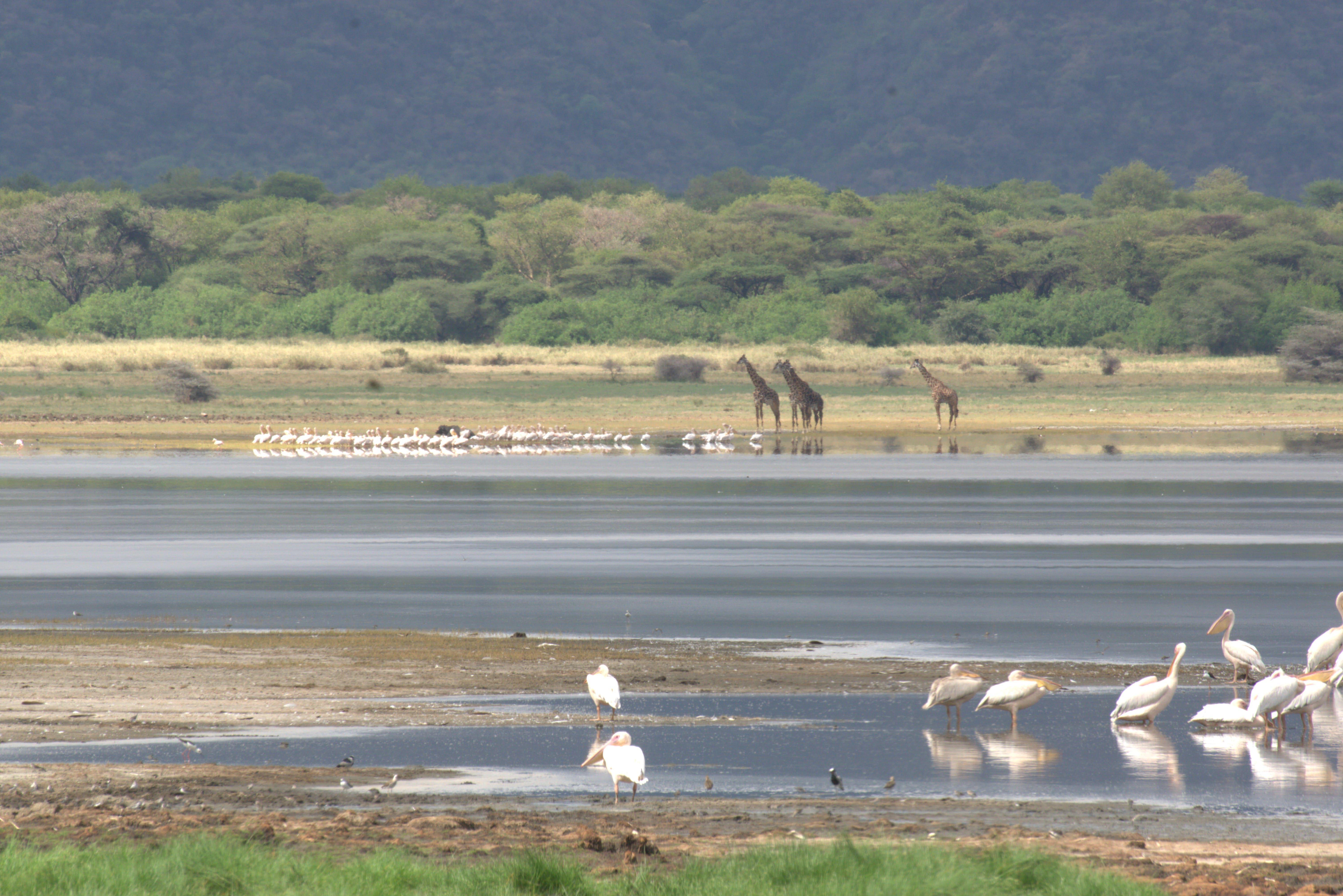 Lake Manyara NP, Tanzania. Picture: Anne-Julie Rochette