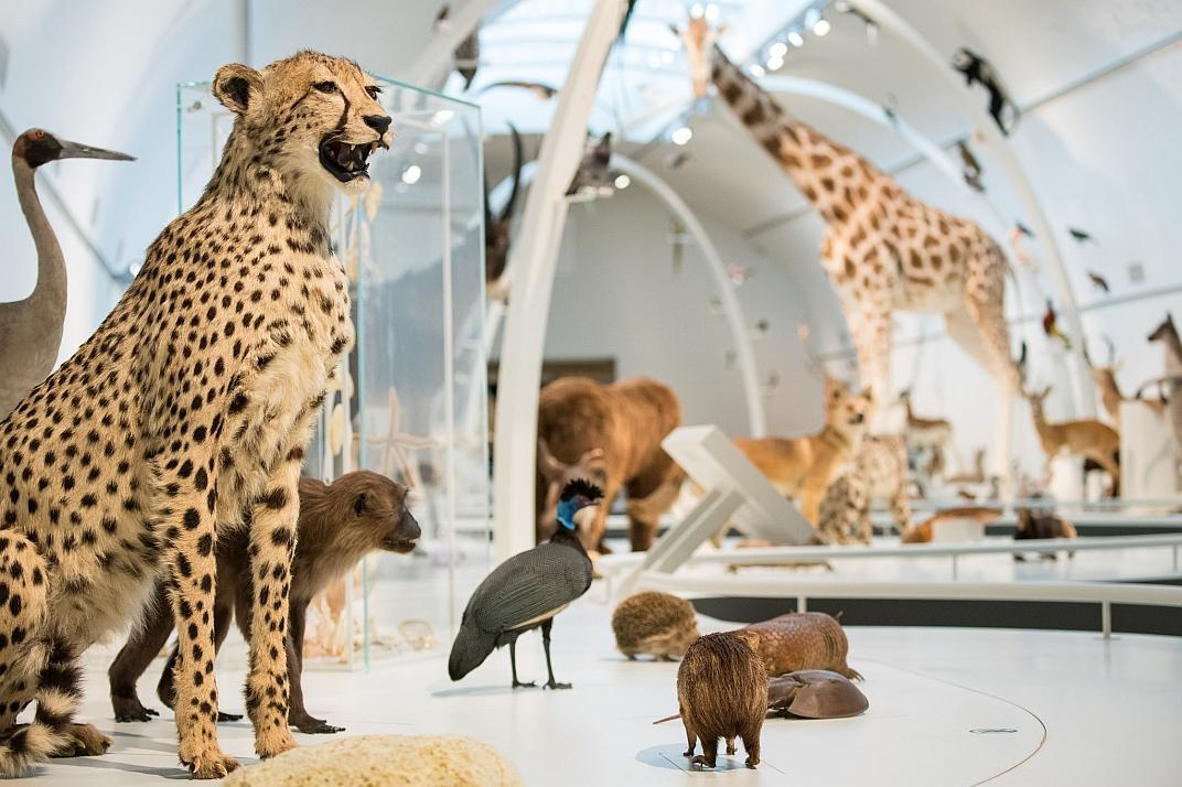 À l'entrée de Planète Vivante, vous découvrirez un foisonnement d'animaux (Photo : Thierry Hubin, IRSNB)