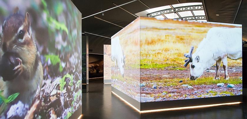 In Levende Planeet worden de gepresenteerde leefomgevingen geïllustreerd door projecties op grote schermen (foto: Thierry Hubin / KBIN).