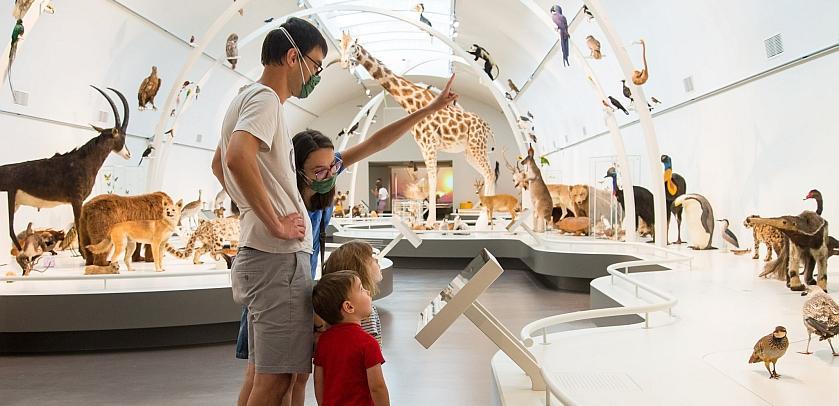 Die Besucher entdecken die vielen eingebürgerten Tiere, die in Lebendiger Planet ausgestellt sind (Foto: Thierry Hubin / KBIN)