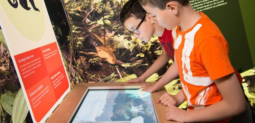 Jeunes visiteurs devant un écran interactif dans l'expo LES SINGES (photo : Thierry Hubin / IRSNB)