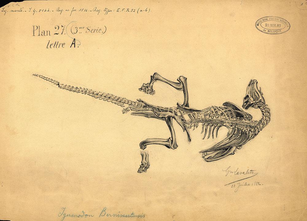 L'un des iguanodons découverts à Bernissart, dessiné dans la position exacte dans laquelle il gisait par Gustave Lavalette (reproduction : IRSNB)