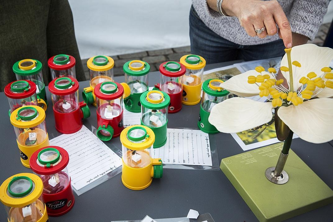 Wilde bijen observatie- en identificatiespel (foto: KBIN_KBVE)