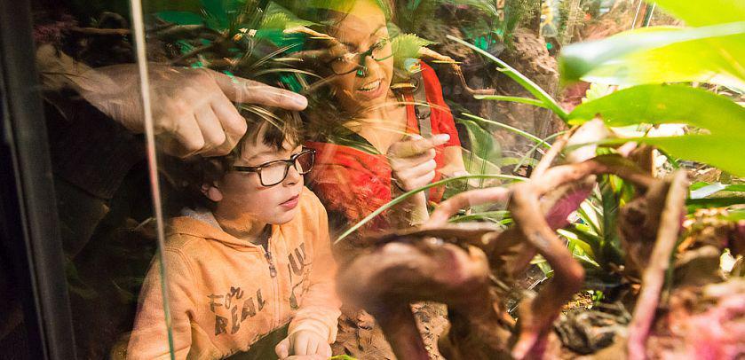 Des visiteurs pointant du doigt l'occupant d'un vivarium de l'expoPOISON (photo: Thierry Hubin, IRSNB)