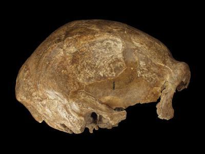Spy skull