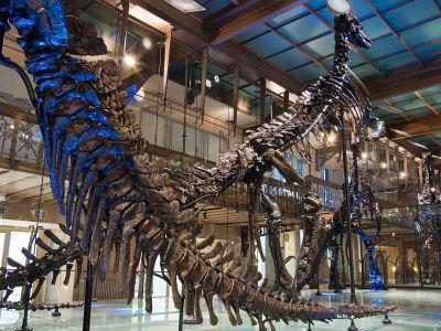 Iguanodons dans notre Galerie des Dinosaures