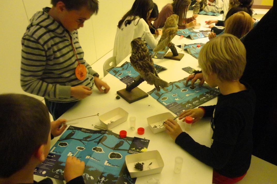 Halloween-nachtraven in het Museum: dissectie van braakballen