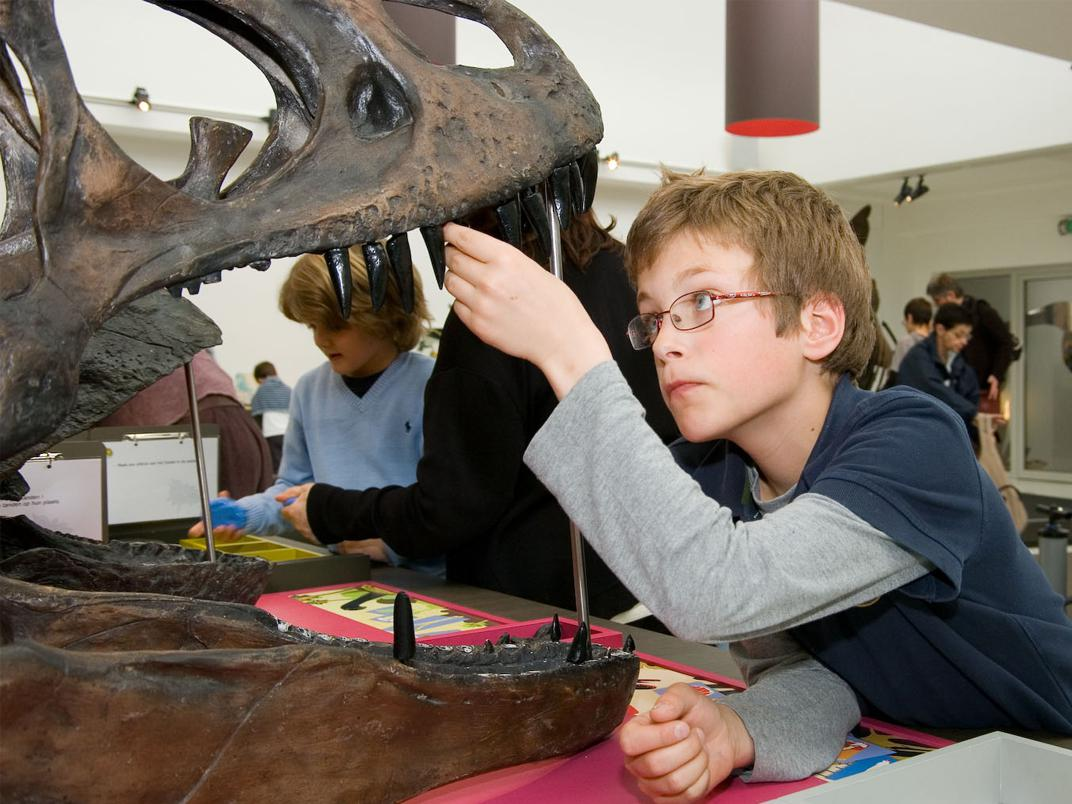 laboratoire de paléontologie: herbivore ou carnivore ?