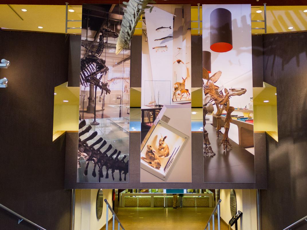 rondleiding - Overzicht van het Museum