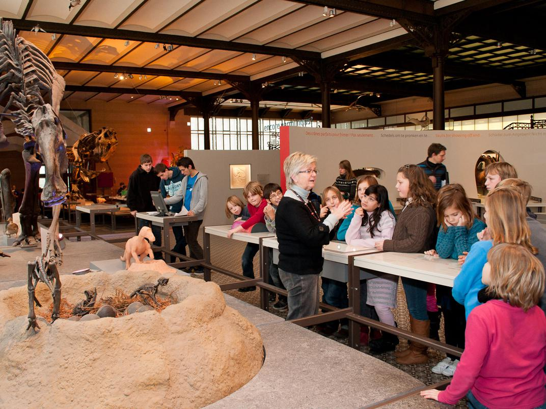 guided tour - Dinosaurs