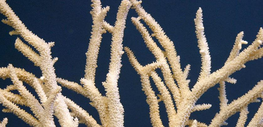 close-up of a coral exhibited in the Shells Hall