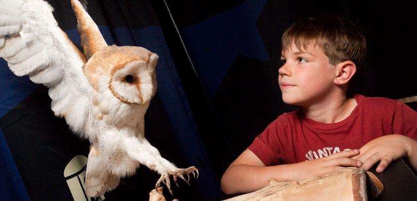 A child admires a stuffed barn owl.