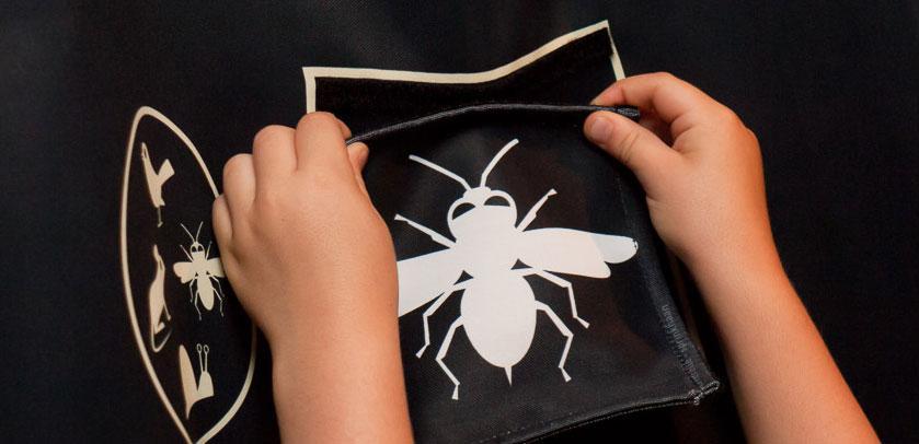 dessin d'un insecte nocturne