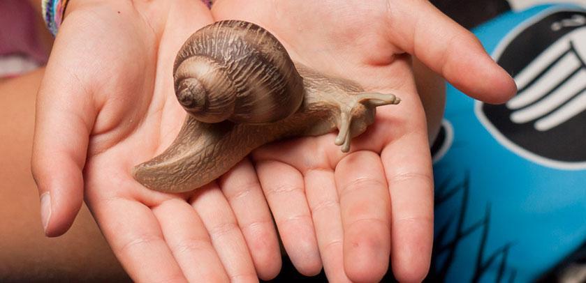 figurine d'un escargot
