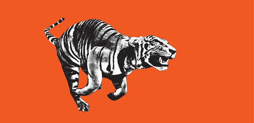 Visual van 'WoW - Wonders of Wildlife': een lopende tijger in zwart en wit op een oranje achtergrond