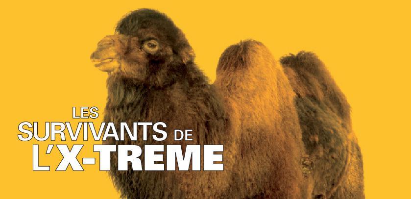 Les survivants de l'X-TRÊME : visuel de l'expo avec un chameau, vaisseau du désert et champion de la soif toutes catégories