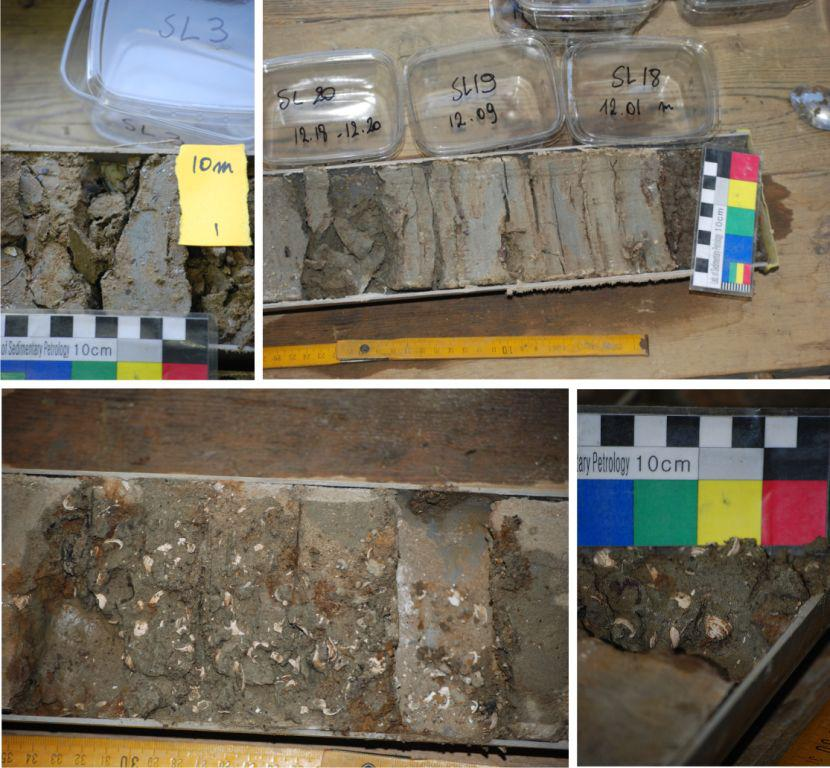 Sedimentary cores from the western coastal plain from Belgium