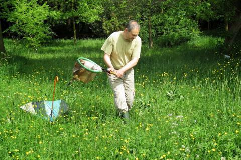 Un entomologiste récolte des insectes avec un filet à papillon (Photo : Isabelle Sauvage / IRSNB)