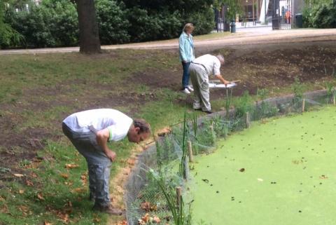 Collecte d'insectes le long des berges de l'étang du Parc Léopold (Photo : IRSNB)