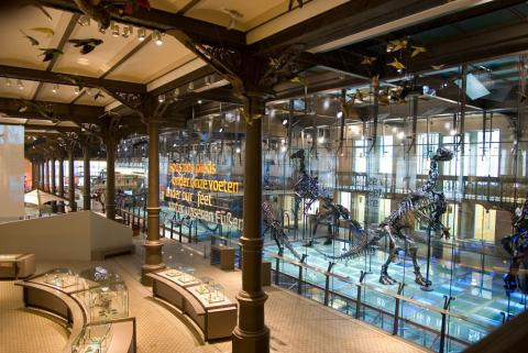 the glass case (300 m2) protects 8 fossilized skeletons of Iguanodon still standing in the same biped kangaroo position they were put in during the first assembly