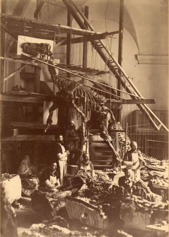 Assembly of the most complete specimens in a chapel with a scaffold and ropes