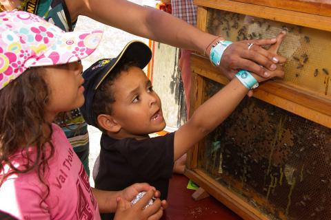 deux enfants observent une ruche didactique (photo: IRSNB)