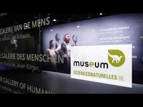 Galerie de l'Homme - Notre évolution, notre corps