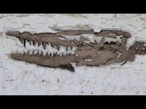 Onze Natuurlijke Selectie - De Hainosaurus van Ciply