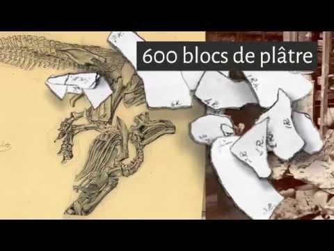 Notre Sélection Naturelle - Les Iguanodons de Bernissart