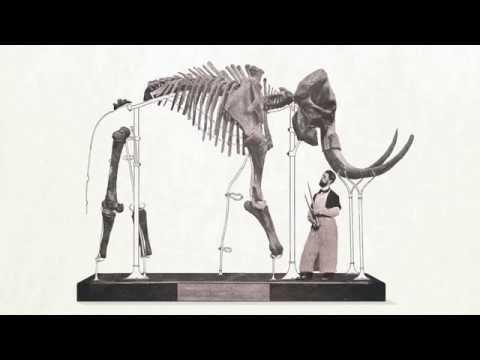 Notre Sélection Naturelle - Le mammouth de Lierre