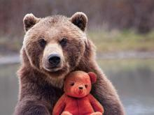 """Visuel de l'expo """"Ours et Nounours"""" : un ours brun dans la nature tenant un nounours"""
