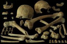 Menselijke botten ontdekt in de grot van Spy (België) in 1886. (Copyright : P. Semal, KBIN)