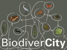 Visual BiodiverCity