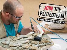 Preparateur Aldo Impens verwijdert een voet uit het sediment met een soort tandartsboor. (Foto: Thierry Hubin / KBIN)