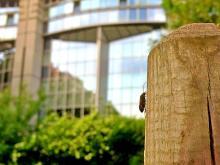 Un coléoptère au coeur de Bruxelles