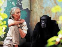 Jane Goodall (Photo: Michael Neugebauer)