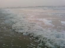 La couche de mousse jaunâtre sur la plage: une conséquence de l'eutrophisation. (photo: IRSNB)