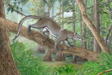 Artist impression of Dormaalocyon latouri, one of the first modern mammals in Europe