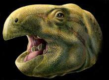 Artistieke reconstructie van de nieuwe dinosaurussoort Matheronodon provincialis. (Beeld: Lukas Panzarin)